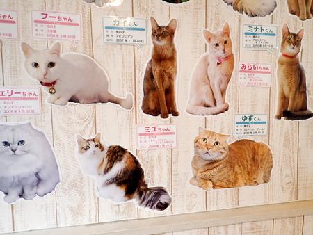 猫カフェれおん28
