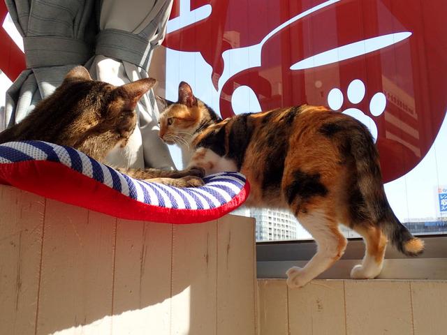 猫カフェ06