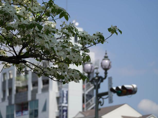 秦野街景07