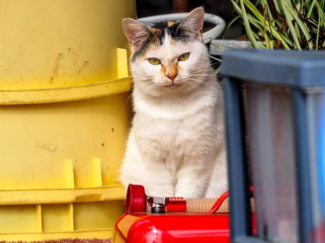 野良猫14