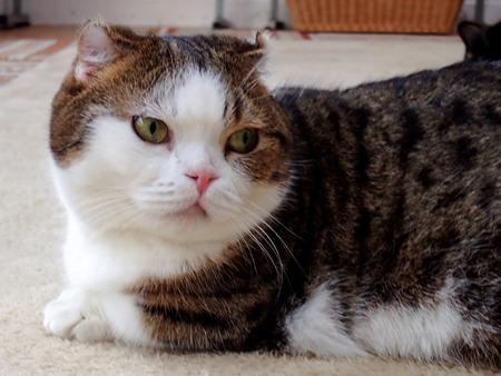 猫カフェれおん2
