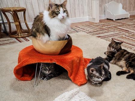 猫カフェれおん14