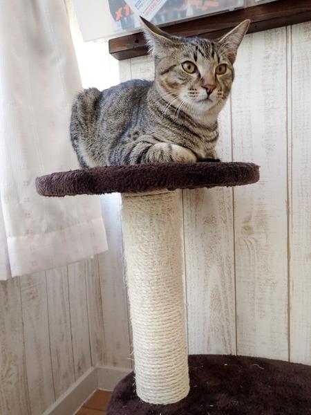 猫カフェれおん25