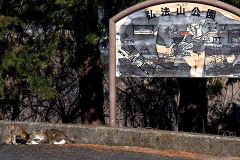 弘法山15