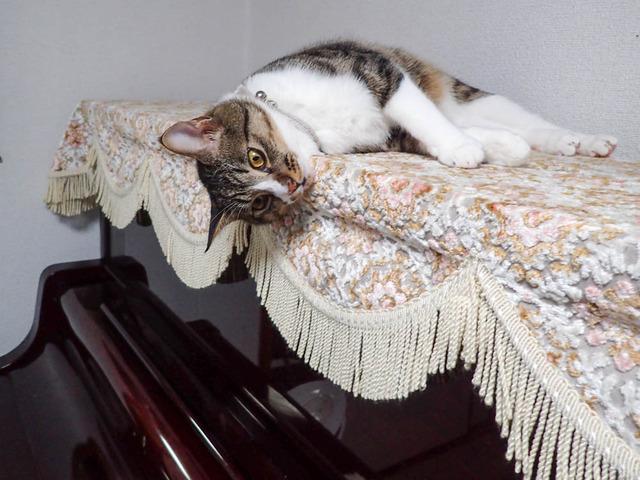 愛猫c01