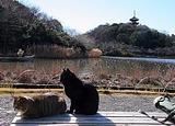 横浜・三渓園の猫