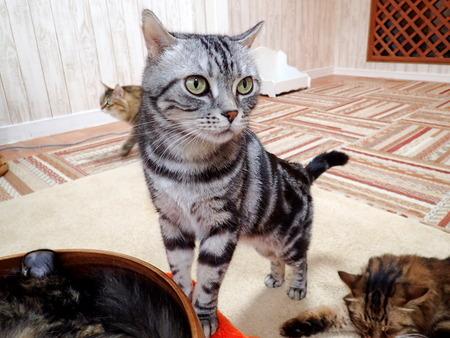 猫カフェれおん13