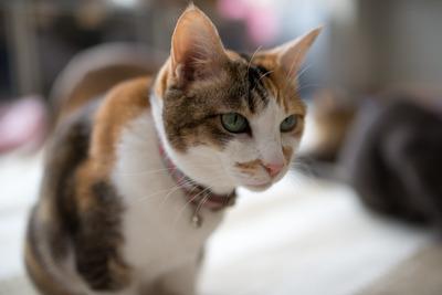 猫カフェ・レオン8
