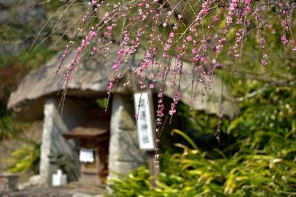 龍尾神社25