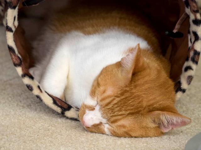 猫カフェ24