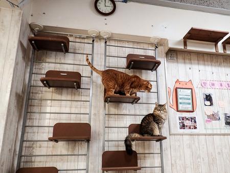 猫カフェれおん19
