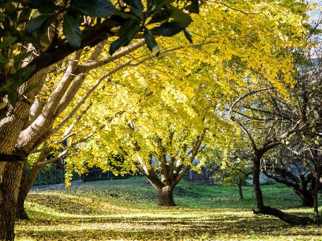 弘法山公園2