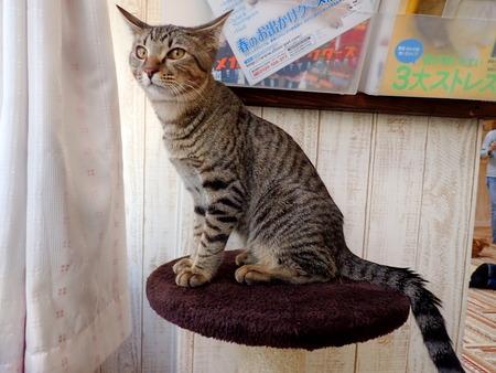 猫カフェれおん21
