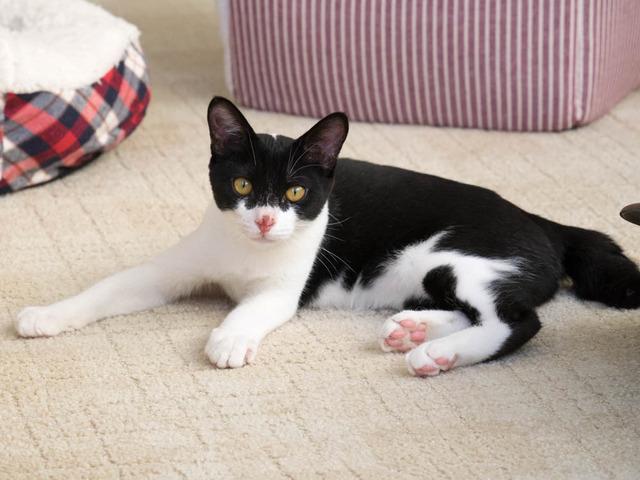 猫カフェ18
