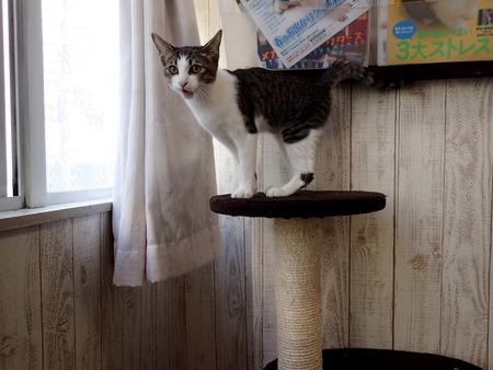 猫カフェれおん12