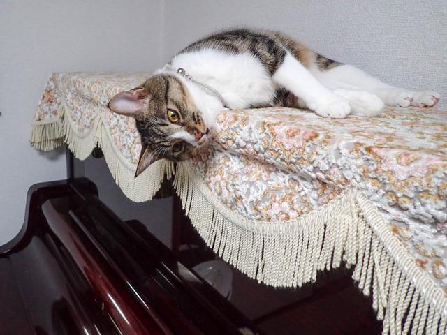 愛猫c04