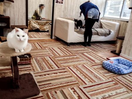 猫カフェれおん8