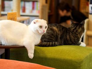 猫喫茶11