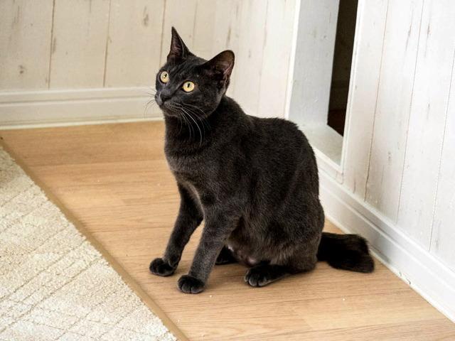 猫カフェ12