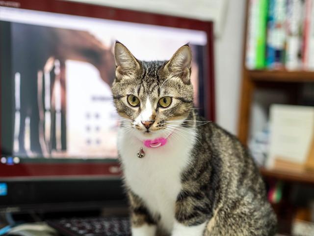 1025愛猫9