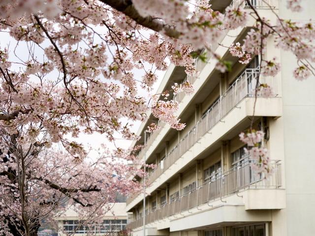 いつもの散歩道2015.4.2