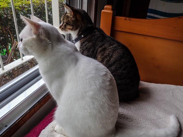 愛猫と街猫2