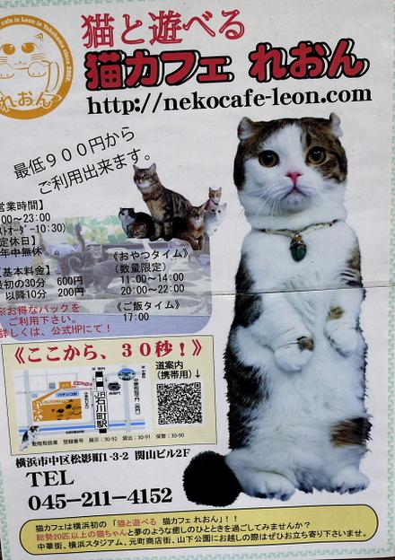 猫カフェ れおん