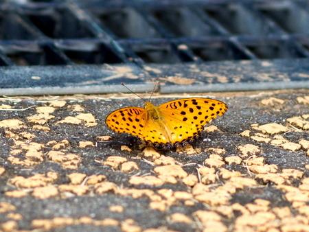 11月の蝶