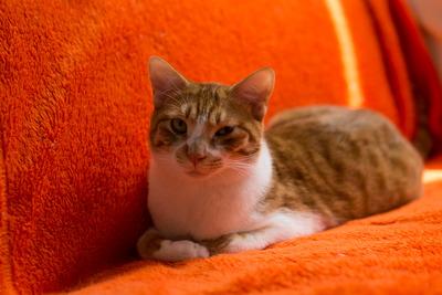 猫カフェ・レオン16