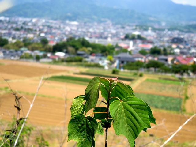 渋沢丘陵3