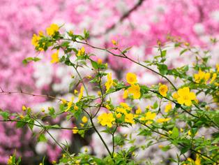 春の坂道11