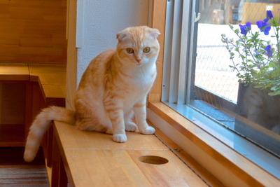 猫カフェ(その2)