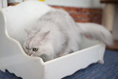 猫カフェ・レオン18