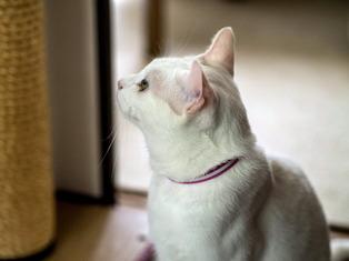 1025愛猫17