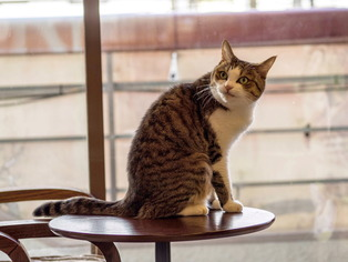 猫喫茶16