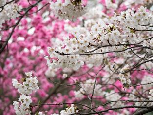 春の坂道9