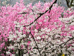 春の坂道10
