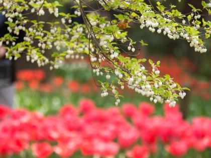 横浜公園19