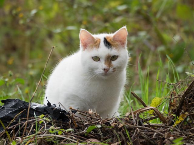 野良ネコ2