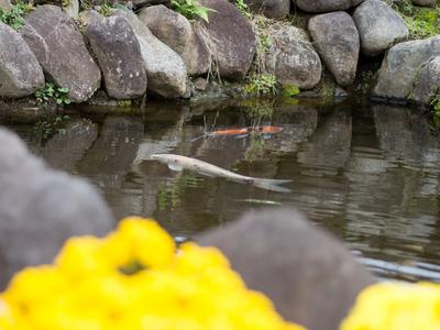 花咲く里山9