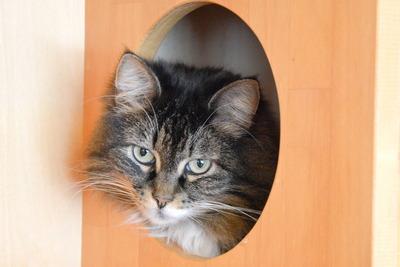Cattail9