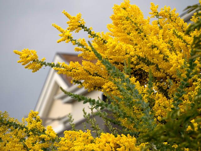 春の坂道13
