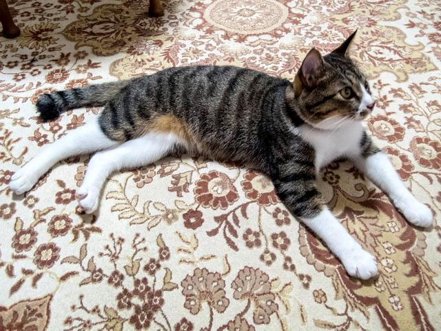 愛猫たち01