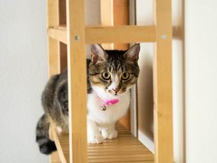 1025愛猫1
