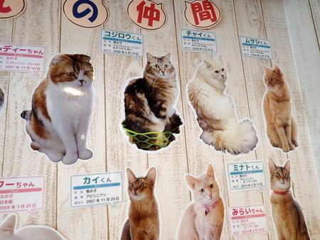 猫カフェれおん27