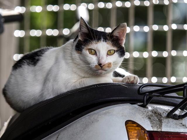 野良猫15
