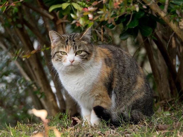 野良猫10