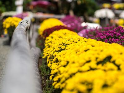 花咲く里山2