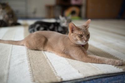 猫カフェ・レオン25