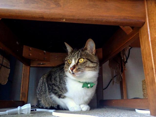 きょうの猫